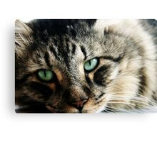Juan - Maine Coon Cat - Qld Canvas Print