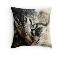 Juan - Maine Coon Cat - Qld Throw Pillow