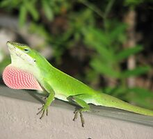 Male Anole by JeffeeArt4u