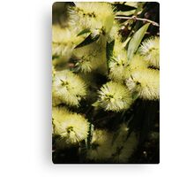 Bottle Brush Fantasy Canvas Print