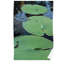 lilly pad trilogy Poster
