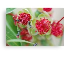Red Bottle Brush Ants Canvas Print