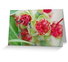 Red Bottle Brush Ants Greeting Card