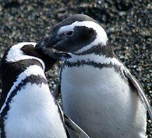 Penguin Love  by belle76