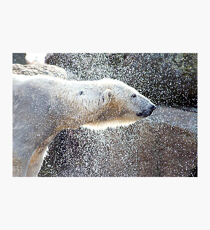 Polar bear1 Berlin zoo Photographic Print