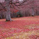 Red Paradise by TaniaLosada