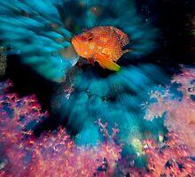 Coral Grouper by Carlos Villoch