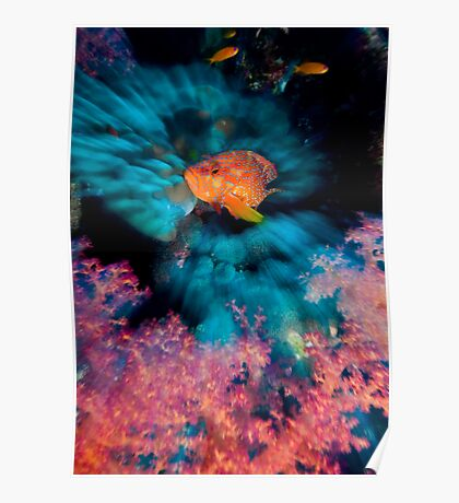 Coral Grouper Poster