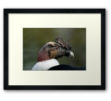 Vulture1 Framed Print