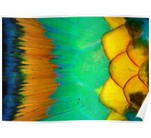 Parrotfish scales Poster