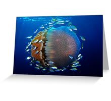 Jellyfish with fish Greeting Card