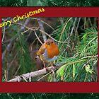 Merry Christmas Robin by Martina Fagan