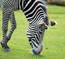 Zebra1 by Colin White