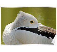 Pelican1 Poster