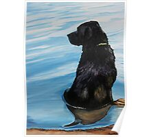 Black Lab in Water Poster