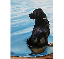 Black Lab in Water Photographic Print