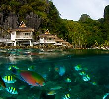 Tropical Fish by Carlos Villoch