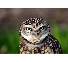 Owl1 Photographic Print