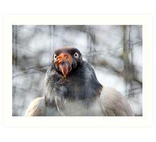 Vulture2 Art Print
