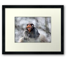 Vulture2 Framed Print