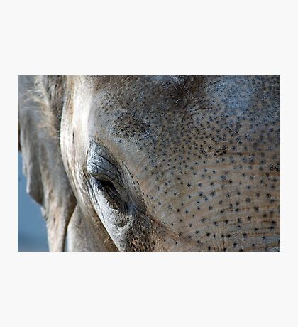 Elephant's eye Photographic Print