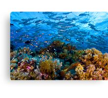 Coral Reef Canvas Print