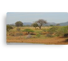 Hluhluwe Game Reserve, South Africa Canvas Print