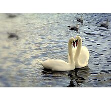 Swan Heart  Photographic Print