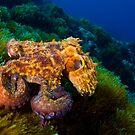 Octopus by Carlos Villoch