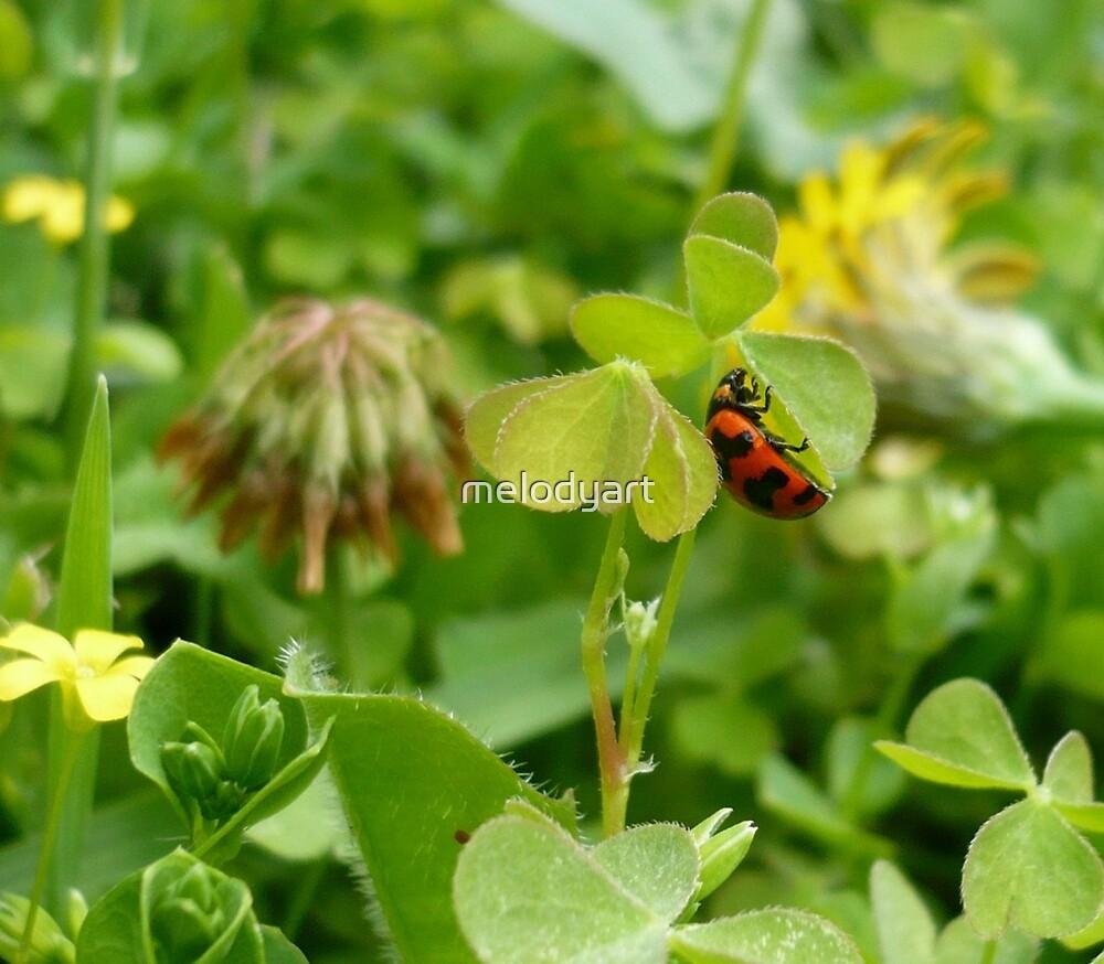 Lady Beetle Seeks Shelter by melodyart
