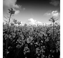 Black and white flowers Photographic Print