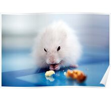 the little hamster Poster