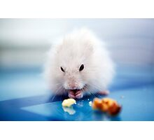the little hamster Photographic Print