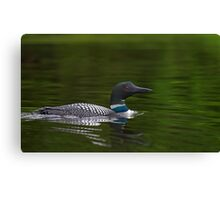 Common loon - Wilson Lake Canvas Print