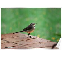 Little Wagtail Poster