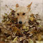 Autumnboy by Sabine Jacobsen [SJArt]