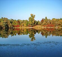 Lake Mirror in the autumn by robertpatrick