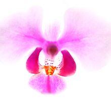 heavenly creature in pink coat by Benjamin Othman Hultengren