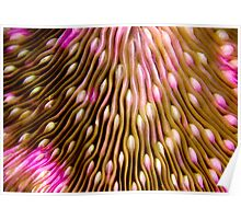 Coral texture Poster