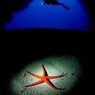 Diver and sea star by Carlos Villoch