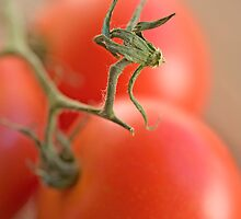 You Say Tomato by Sarah-Jane Covey