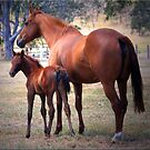 Mare and Foal by Kym Howard