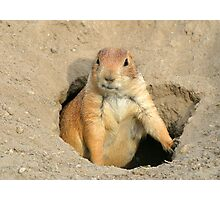 prairie dog Photographic Print