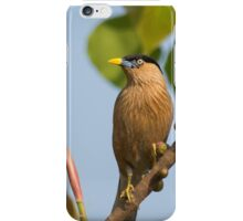 Brahminy Starling iPhone Case/Skin