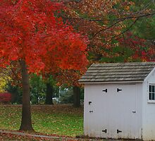 The Little White Shed by Kelly Chiara