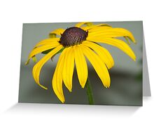 A Black-eyed Susan up close and personal. Greeting Card