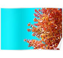 Maple Tree Aqua Sky Poster