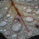 Raindrop Leaf by Tori Snow