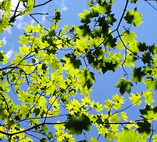 Blue Sky Green Sky by karolina