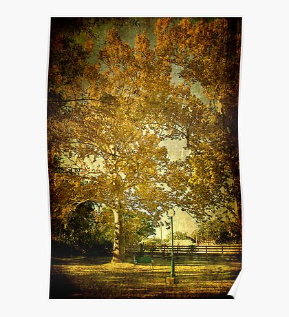 Autumn Colors at Marshall Park Poster
